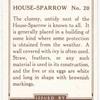 House-Sparrow.
