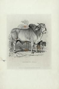 Characteristic sketches of animals, principally from the Zoological Gardens, Regent's Park