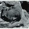 Java, East: Antiquities, Ardimulia. Head of figure prostrate under the seated Guyeshwari (see preceding plate).