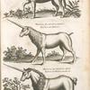 Onager Aldro, Wald Esel; Monoceros seu unicornu iubatus, Einhorn mit Mähnen. ; Mononceros seu unicornu aliud, Einhorn mit Mähnen ein andr art.