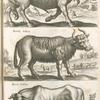 Bison, Wilder Ochs Wisent; Bubalus Indicus; Vacca Indica.