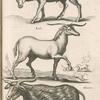 Capra Strephiceros; Eale; Alicorn.