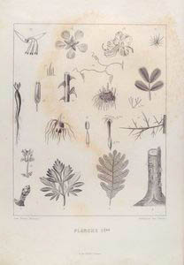Planche 1ère (Botanique des Dames) [b&w]