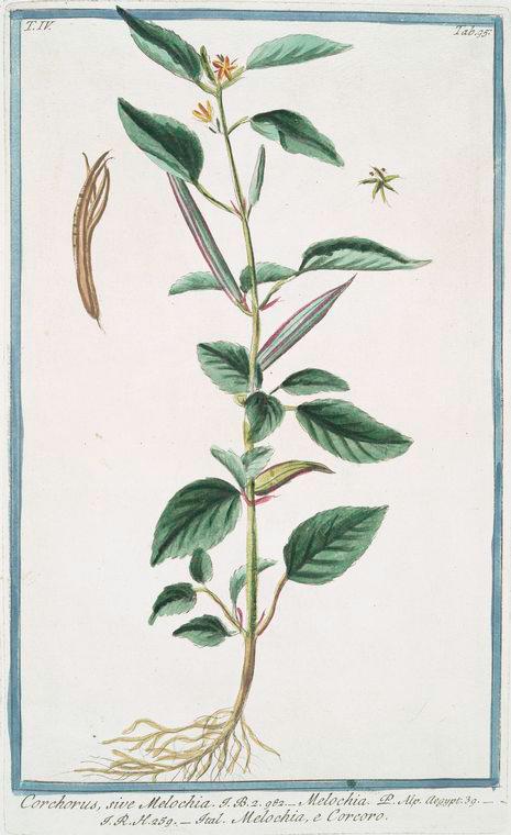 in 1772