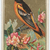Baltimore Oriole.