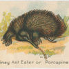 Spiney Ant Eater or Porcupine.
