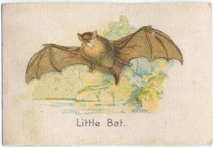 Little Bat.