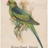 Ring-Neck Parrot.