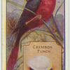 Crimson Finch.