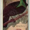 Rifle Bird.