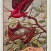 Blood Bird.