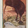 Kiwi Kiwi.