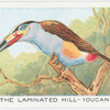 The Laminated Hill-Toucan.
