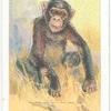 The Chimpanzee.