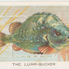 The lump-sucker.