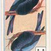 Birds of brilliant plummage.