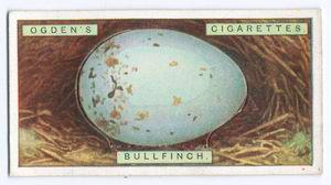 Bullfinch's egg.