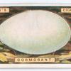 Cormorant's egg.