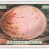 Golden eagle's egg.