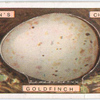 Goldfinch's egg.