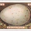 Goldfinch's egg.