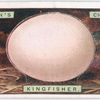Kingfisher's egg.