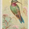 Schreiber's humming bird.