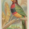 The banded araçari toucan.