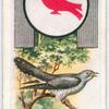 Cuckoo.