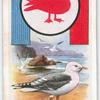 Sea-Gull.