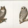 21. The Barred Owl (Ulula nebulosa). 22. The Great Horned Owl (Bubo virginianus).