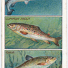 How to Distinguish Different Kinds of Fishes. - 1.
