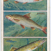 How to Distinguish Different Kinds of Fishes. - 2.