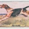 Fox Hound.