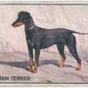 Black & Tan Terrier.