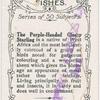 Purple headed glossy starling.