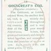 Goldcrest's egg.