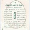 Jackdaw's egg.