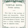 Turtle dove, Turtur auritus.