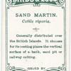 Sand martin, Cotile riparia.