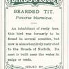 Bearded tit, Panurus biarmicus.