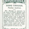 Song thrush, Turdus musicus.