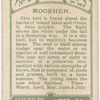Moorhen.