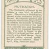 Nuthatch.