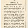 Chaffinch (male).