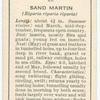 Sand martin (female).
