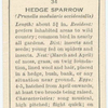 Hedge Sparrow.