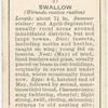 Swallow (female).