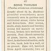 Song thrush (female).