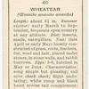 Wheatear (male).